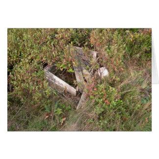 Cartão A caixa do Lobsterman e o bobber, Maine, EUA