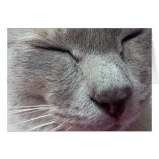 Cartão A cara do gato