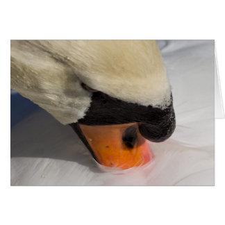 Cartão A cisne Preening