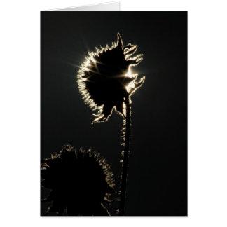 Cartão A corona de um girassol
