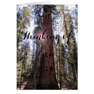 Cartão A floresta Sunlit que pensa de você carda