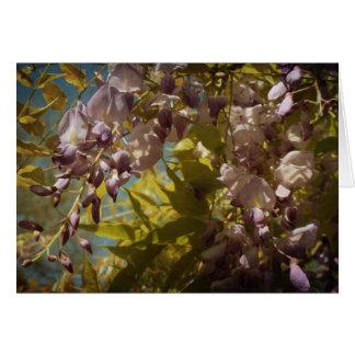 Cartão A glicínia floresce na primavera luz do sol