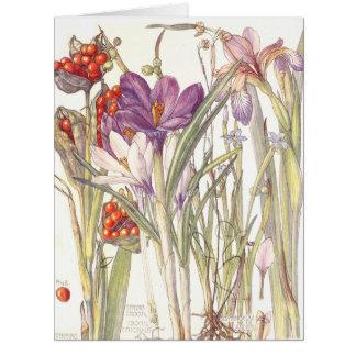 Cartão A íris botânica do açafrão do vintage floresce o