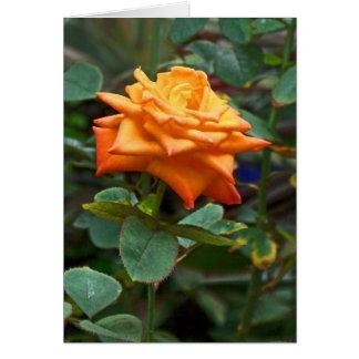 Cartão A laranja aumentou