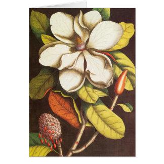 Cartão A magnólia do vintage floresce a planta com