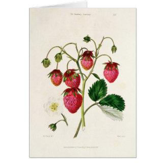 Cartão A morango de Roseberry, gravada por Watte
