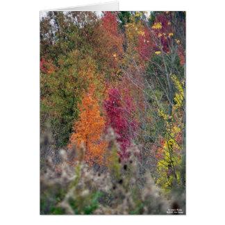 Cartão A paleta do outono