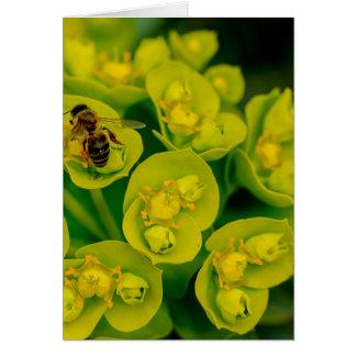 Cartão A planta do Gopher do deserto