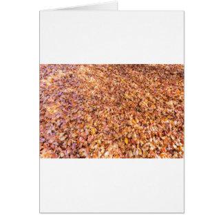 Cartão A terra coberta com a árvore de faia sae no outono