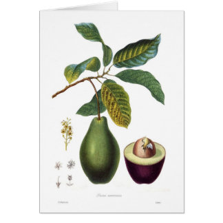 Cartão Abacate (americana do Persea)