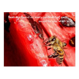 Cartão/abelha do fato da abelha em uma melancia cartão postal