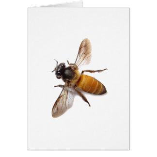 Cartão Abelha do mel