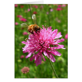 Cartão Abelha do mel na flor cor-de-rosa