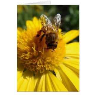 Cartão Abelha do mel na margarida amarela da cor do