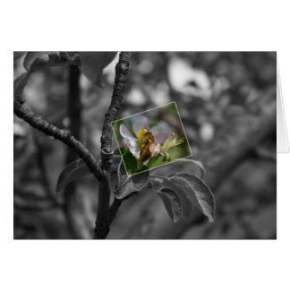 Cartão Abelha em uma flor