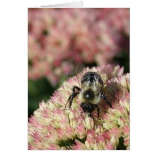Cartão abelha no sedum