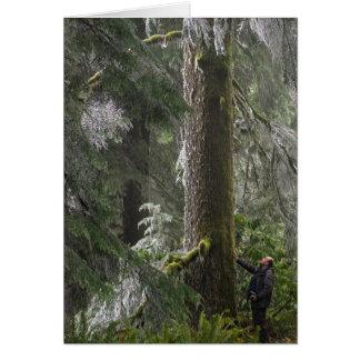 Cartão Abeto de Douglas alto na floresta do estado do