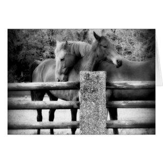 Cartão Abraçando cavalos - é amor!