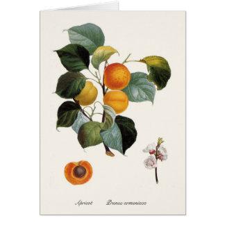 Cartão Abricó