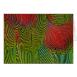 Cartão Abstrato da pena do Macaw do Harlequin