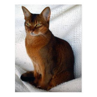 Cartão Abyssinian corado do gato Cartão Postal