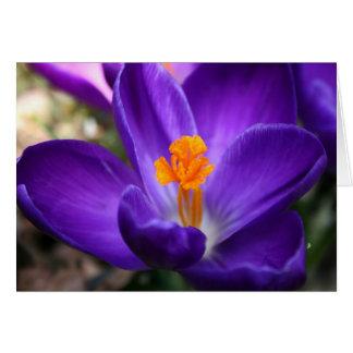 Cartão Açafrão roxo - flor adiantada do primavera