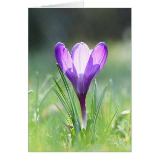 Cartão Açafrão roxo no primavera