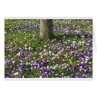 Cartão Açafrões do campo de flores na grama do primavera