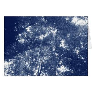 Cartão Acima nas árvores - efeito de Cyanotype