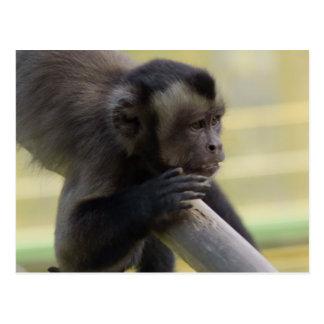 Cartão adornado do macaco do Capuchin