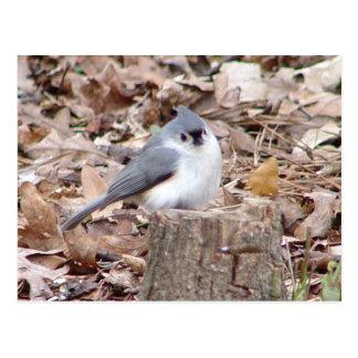 Cartão adornado do pássaro do Titmouse