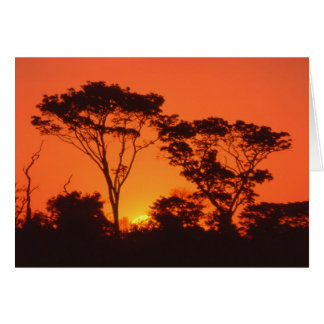 Cartão África do Sul.  Por do sol africano