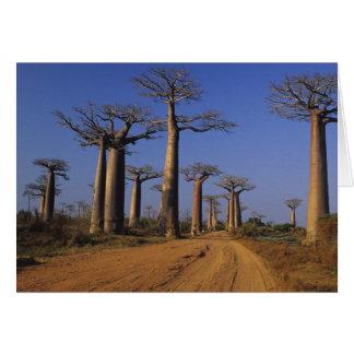 Cartão África, Madagascar, Morondava, avenida do Baobab
