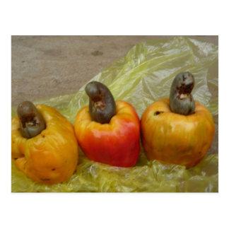 Cartão africano da fruta da porca de caju