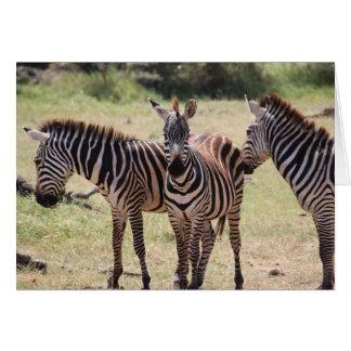 Cartão africano da zebra