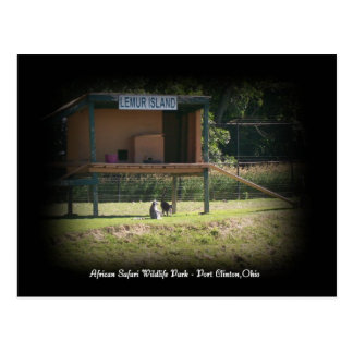 Cartão africano do Lemur do parque dos animais