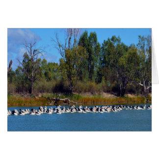 Cartão Agitação da pesca do pelicano, rio Murray,