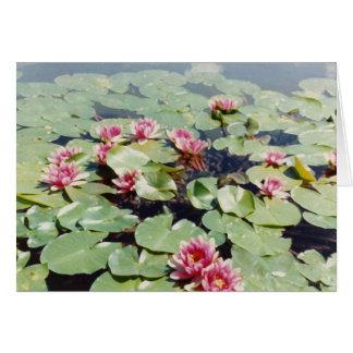 Cartão Água Lillies 01