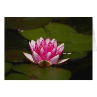 Cartão Água lilly e almofadas