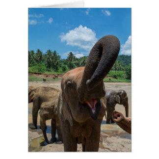 Cartão Água potável do elefante, Sri Lanka