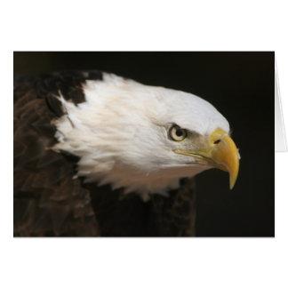 Cartão Águia americana