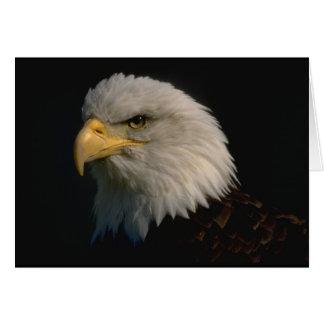 Cartão Águia americana americana