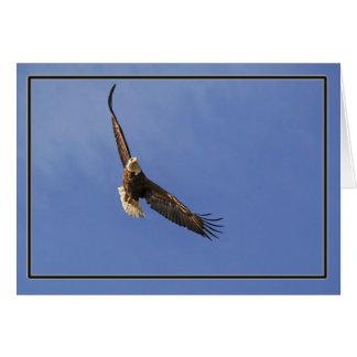 Cartão Águia americana crescente