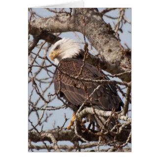 Cartão Águia americana empoleirada em uma árvore