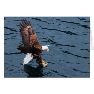 Cartão Águia do Alasca na água
