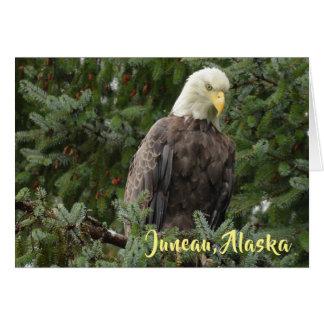 Cartão Águias americanas de Juneau, Alaska