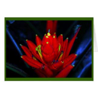 Cartão Ainda vida tropical