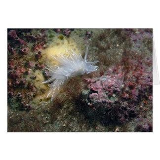 Cartão Alabastro Nudibranch
