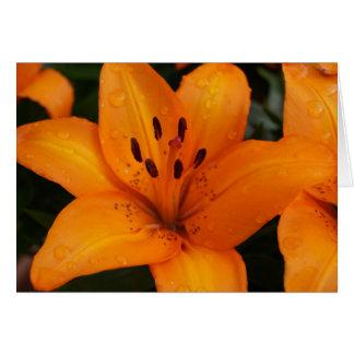 Cartão alaranjado da flor