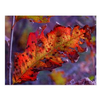 Cartão alaranjado da folha do outono